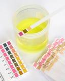 Análisis del pH del espécimen Imagenes de archivo