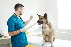 Análisis del veterinario fotos de archivo