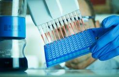 Análisis genético del investigador de la genética Fotos de archivo libres de regalías