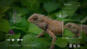 Análisis inconsútil de la animación de un lagarto de árbol con tecnología del interfaz del análisis de la calculadora numérica en libre illustration