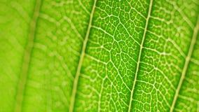 Análisis verde de la hoja metrajes