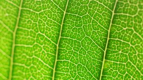 Análisis verde de la hoja