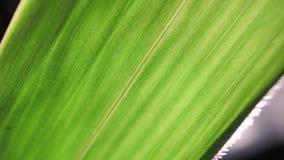 Análisis verde de la hoja almacen de video