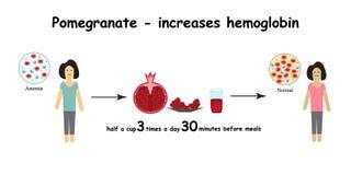anämie Die verringerte Menge von roten Blutkörperchen Granatszunahmen lizenzfreie abbildung