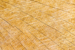 Anéis anuais em um log da madeira, com quebras em um teste padrão solar Fotos de Stock