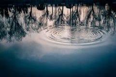 Anéis da água no lago da floresta imagens de stock