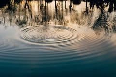 Anéis da água no lago da floresta Fotografia de Stock