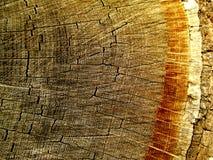 Anéis da casca de árvore imagem de stock royalty free