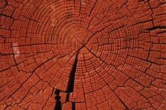 Anéis da idade de uma árvore fotografia de stock royalty free
