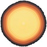 Anéis de árvore ilustração stock