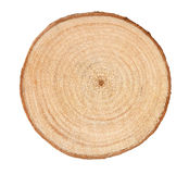 anéis de árvore imagem de stock