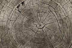 Anéis de árvore Imagens de Stock