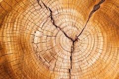 Anéis de árvore Imagens de Stock Royalty Free