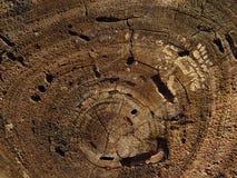 Anéis de árvore Fotografia de Stock