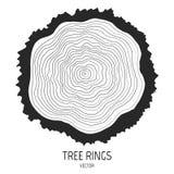 Anéis de árvore anuais Fotografia de Stock Royalty Free