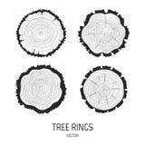 Anéis de árvore anuais ajustados Imagens de Stock Royalty Free