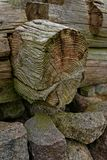 Anéis de árvore Textured Imagem de Stock Royalty Free