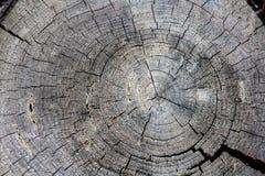 Anéis de árvore velhos Fotos de Stock