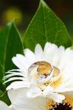 Anéis de casamento com flores Foto de Stock