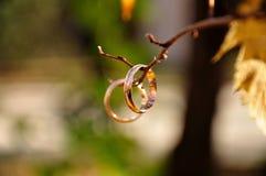 Anéis de casamento em um galho Imagens de Stock Royalty Free