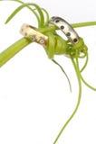 Anéis de casamento juntados com videiras Imagem de Stock Royalty Free