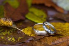 Anéis de casamento na queda Fotografia de Stock Royalty Free