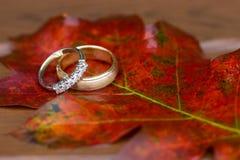 Anéis de casamento na queda Foto de Stock Royalty Free