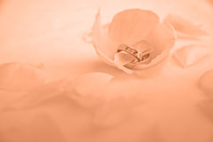 Anéis de casamento sonhadores foto de stock royalty free