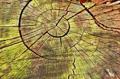 Anéis de madeira Foto de Stock Royalty Free