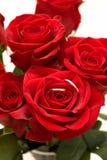 Anéis dentro de Rosa vermelha Fotos de Stock Royalty Free