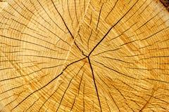 Anéis e rachaduras de árvore Imagens de Stock Royalty Free