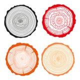 Anéis em um longo Grupo de seção transversal da árvore Fotos de Stock