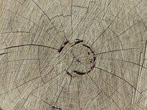 Anéis em um tronco de árvore Imagem de Stock