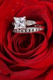 Anéis nas pétalas cor-de-rosa vermelhas Fotos de Stock