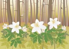 Anémona en un bosque ilustración del vector