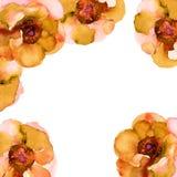An?monas anaranjadas Tarjeta de felicitaci?n cuadrada con las flores Ilustraci?n de la acuarela imágenes de archivo libres de regalías
