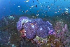 Anémonas de la alfombra con tentáculos púrpuras fluorescentes imagen de archivo