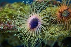 Anémonas de mar en colores abstractos fotografía de archivo libre de regalías