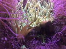 Anémone de créatures de mer Images libres de droits