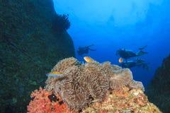 Anémone et plongeurs autonomes photographie stock