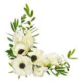 Anémones, feuilles d'eucalyptus et fleurs blanches de freesia dans un corne photographie stock