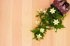 Anêmona da flor Fotografia de Stock