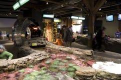 Anêmona de mar no aquário de Seattle Imagem de Stock Royalty Free