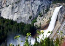Anêmona ocidental por Nevada Fall, parque nacional de Yosemite fotografia de stock