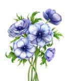 Anêmonas de florescência de cumprimento florais da mola do ramalhete bonito imagem de stock royalty free