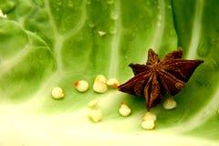 Anís de estrella Imágenes de archivo libres de regalías