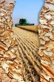 Anúncio orgânico do agricultre Imagem de Stock Royalty Free