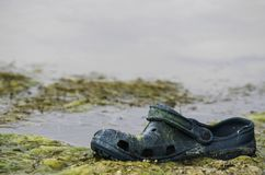 Free An Abandoned Old Shoe Lying On The Shore Of The Swamp Stock Photo - 156448840