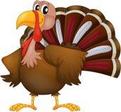 An Angry Turkey Stock Photos