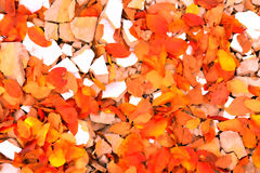 An Autumn Comes Royalty Free Stock Photo